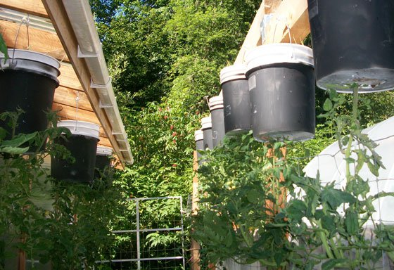 From algae to wabbits a revised aquaponic system design wrong way home - Upside down gardening ...