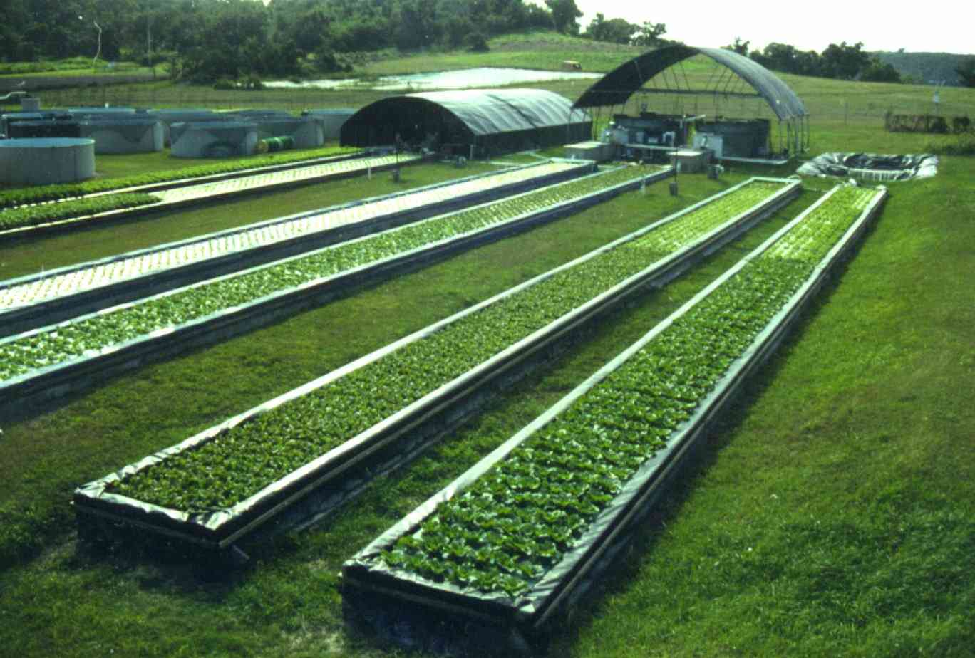 Choosing the perfect place for an aquaponic system